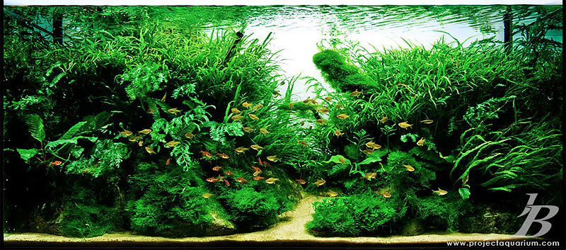 Post Your Local Tank S Page 3 The Planted Tank Forum