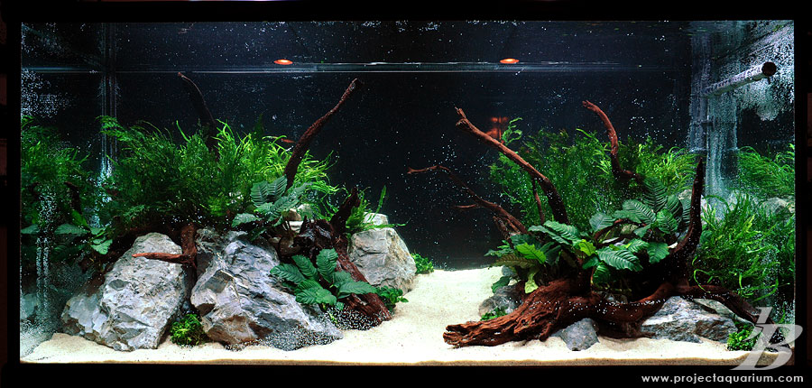 Project 178 the planted tank forum for Narrow fish tank